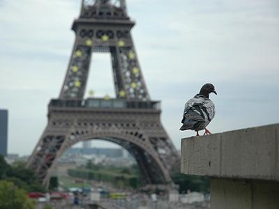 piccioni-pericolo-per-il-patrimonio-artistico-ma-anche-per-la-salute