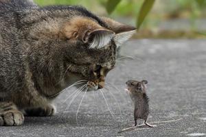 Gatti E Topi Ormai Amici Disinfestazioni E Piscine