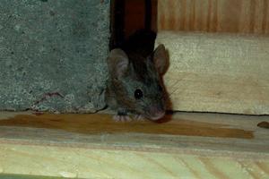 Inverno topi pi vicini a casa disinfestazioni e piscine for Porte garage sectionnelle 300x200