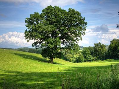contribuiamo-alla-salvaguardia-dell'ambiente